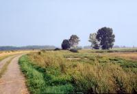 Droga polna, trawy i drzewa
