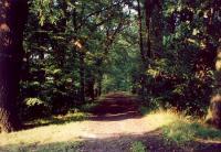 Ścieżka przez las oświetlona słońcem
